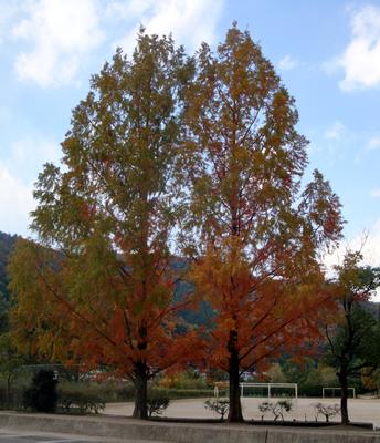 京都上賀茂紅葉写真