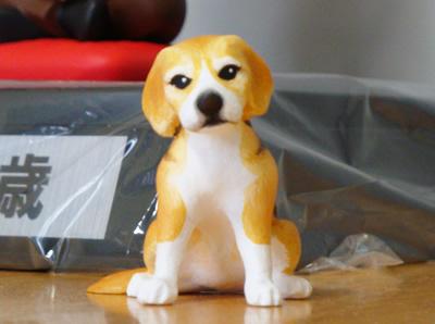 ビーグル犬正面