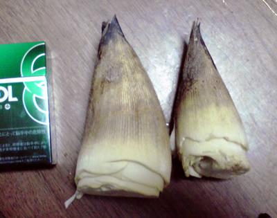 上賀茂の筍